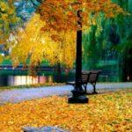 عکس برگ های زرد پاییزی برای صفحه موبایل