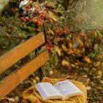 عکس زیبا از فصل پاییز برای پس زمینه موبایل