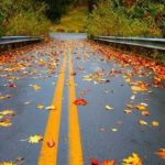 والپیپر پاییزی با کیفیت برای موبایل