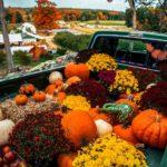 عکس زیبا از میوه های پاییزی با کیفیت بالا برای پس زمینه موبایل