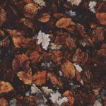 عکس از برگ های زیبای پاییزی با کیفیت بالا
