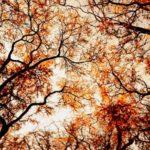 عکس آسمون پاییزی برای صفحه موبایل