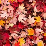 عکس برگ ریزون پاییز برای پس زمینه موبایل