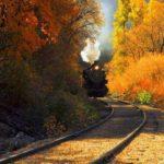 منظره زیبا از جنگل پاییزی برای پس زمینه موبایل