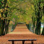 عکس نیمکت در جنگل پاییزی برای پس زمینه موبایل