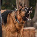عکس سگ پلیس وحشی