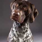 عکس سگ پلیس نژاد بوری