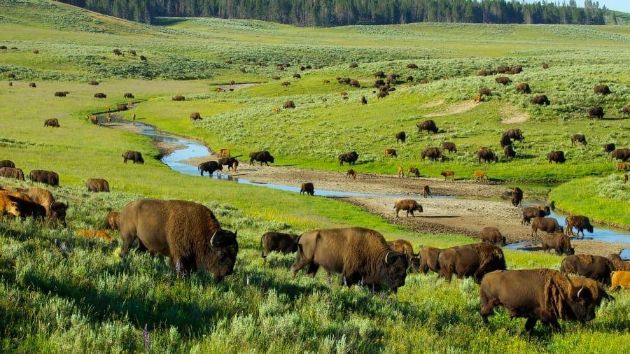 بهترین مناطق روی زمین در سال 2020: پارک ملی Yellowstone، در ایالات متحده