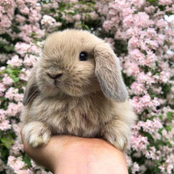 نژادهای مختلف خرگوش این حیوان دوست داشتنی را بشناسید + عکس