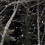 عکس برف در شب