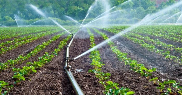 مراحل کشاورزی کاشت، داشت و برداشت محصول