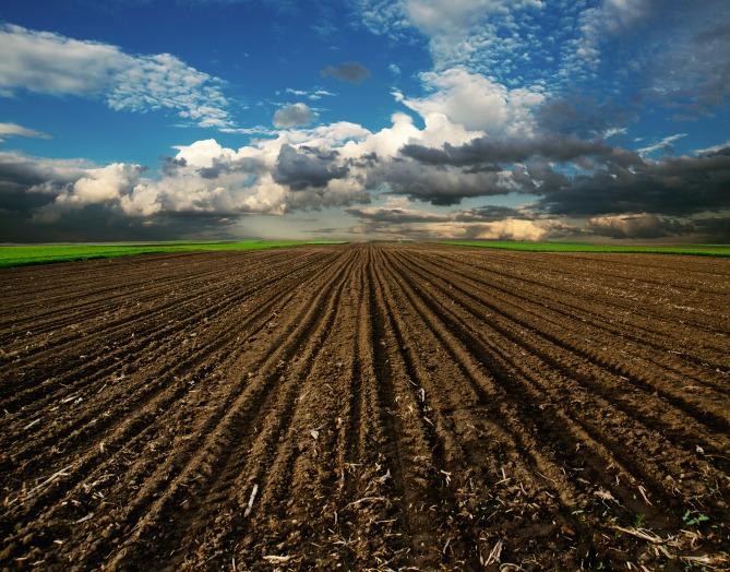 مرحله کاشت در کشاورزی