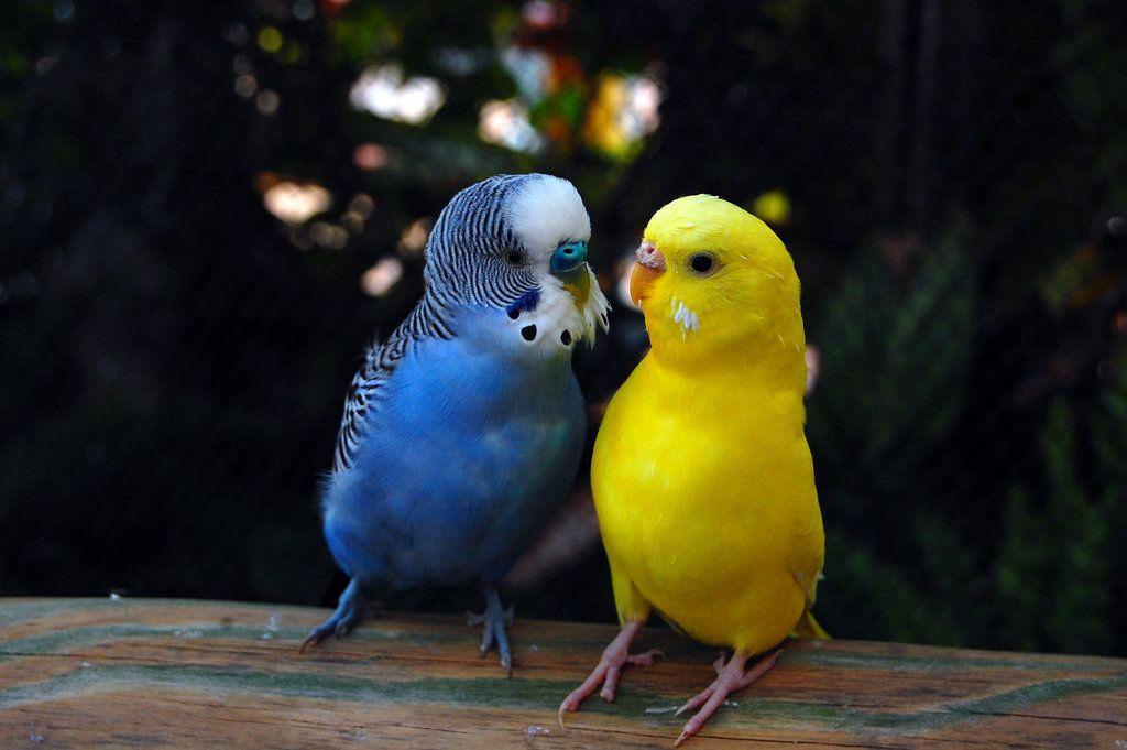 مرغ عشق های عاشق