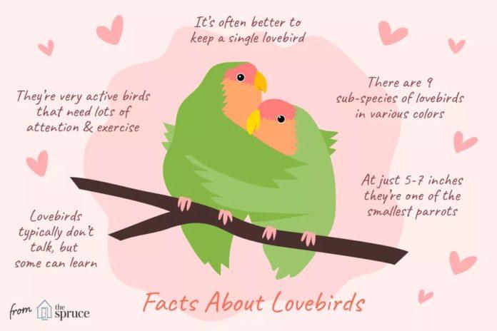 حقایقی در مورد مرغ عشق