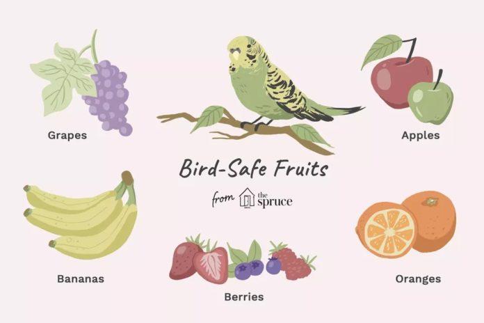 میوه های مفید برای پرندگان