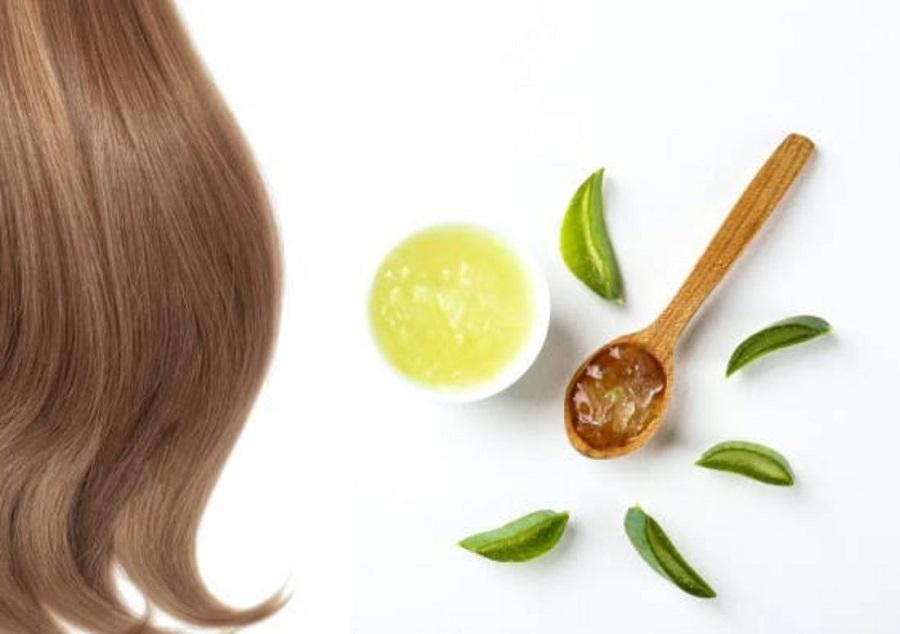 روش استفاده از گیاه آلوئه ورا برای مو