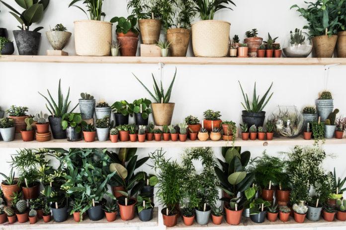10 نوع از بهترین گیاهان آپارتمانی