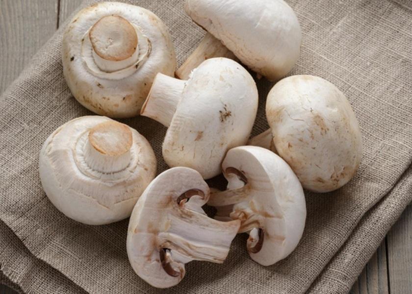 خواص قارچ بر رشد مژه