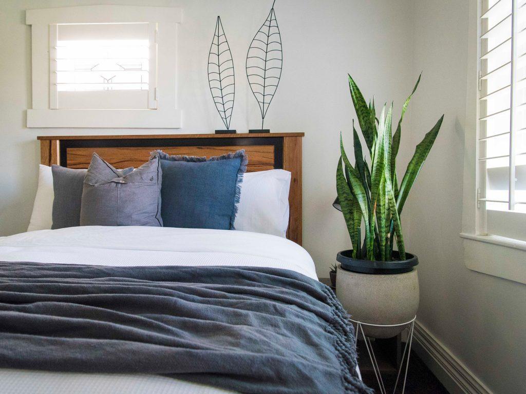 بهترین گیاهان آپارتمانی مناسب اتاق های خواب