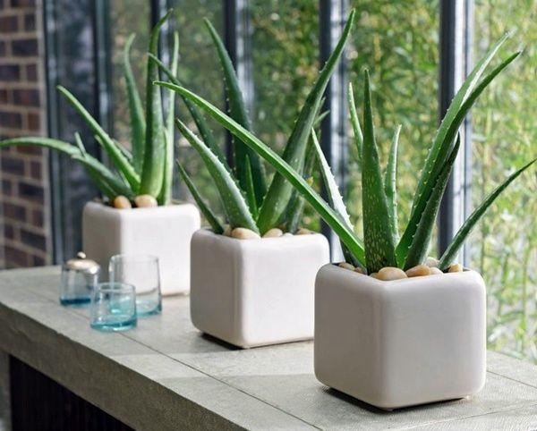چه گیاهانی برای نگهداری در آشپزخانه مناسب می باشند؟