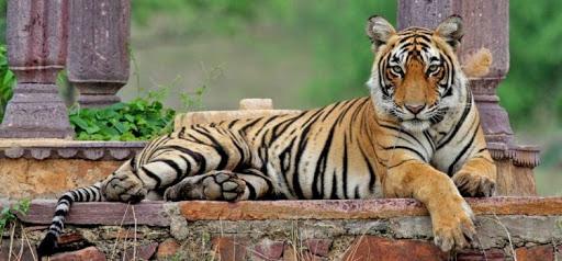 اطلاعات کامل درباره حیواناتی که نماد کشورها هستند