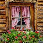 دانلود عکس گلدان لب پنجره
