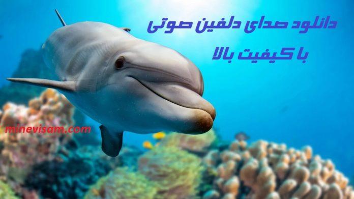 دانلود صدای صوتی دلفین با کیفیت بالا