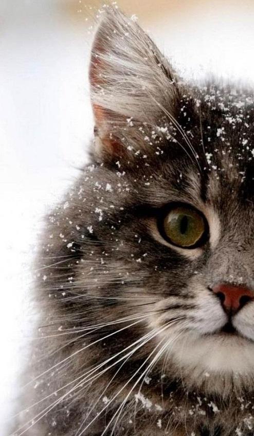 اسم گربه ایرانی