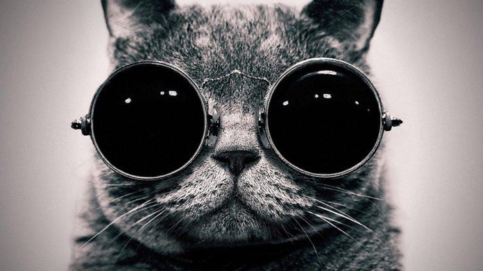 انتخاب اسم برای گربه سیاه (فهرستی از اسم های پیشنهادی برای گربه سیاه)