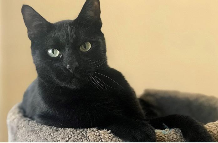 انتخاب اسم گربه سیاه