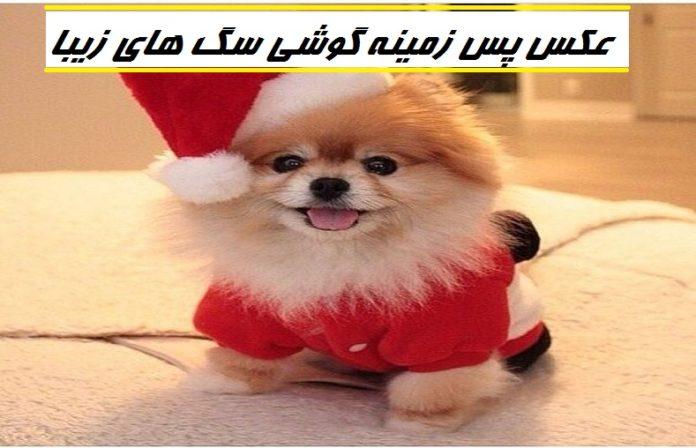 عکس پس زمینه گوشی سگ های زیبا