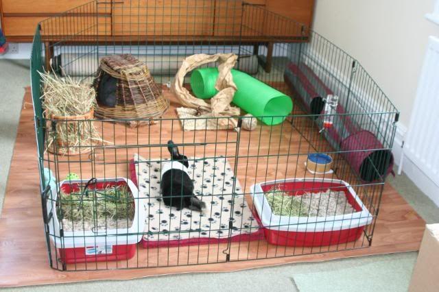 محل غذا و خواب خرگوش را مشخص نمایید