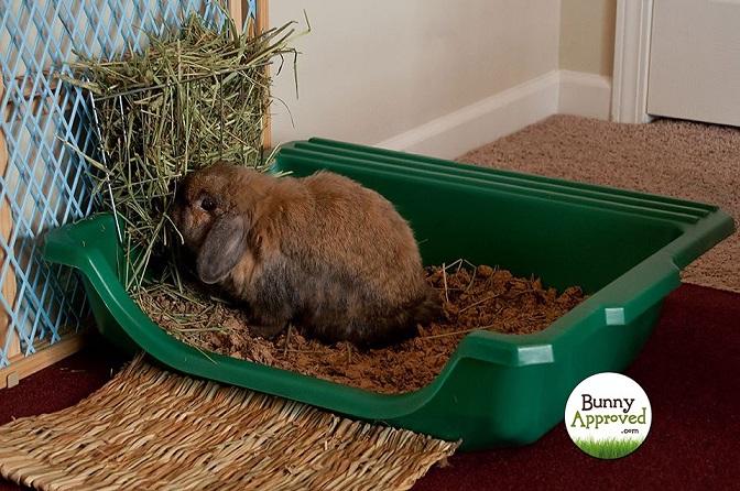 مراحل آموزش دادن دستشویی به خرگوش