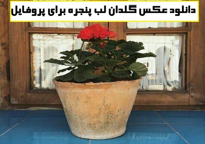 دانلود عکس گلدان لب پنجره برای پروفایل