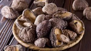 انواع قارچ خوراکی پرورشی در ایران: قارچ شیتاکه