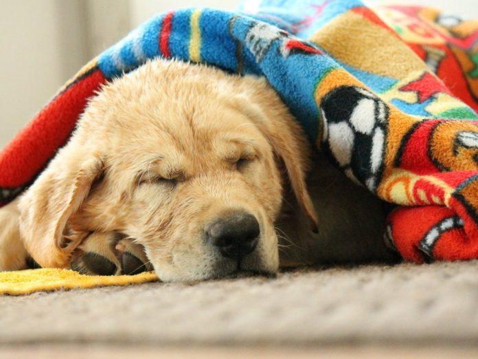 سگها به چه مقدار خواب نیاز دارند؟