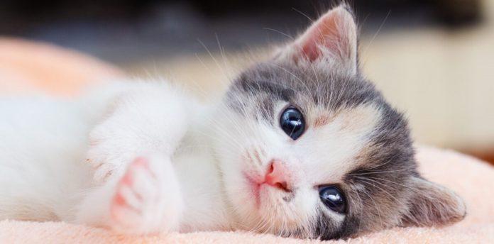 اسم باکلاس برای گربه